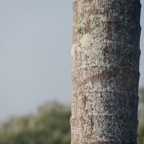 The image shows a render made usingour Palm Tree Bark texture