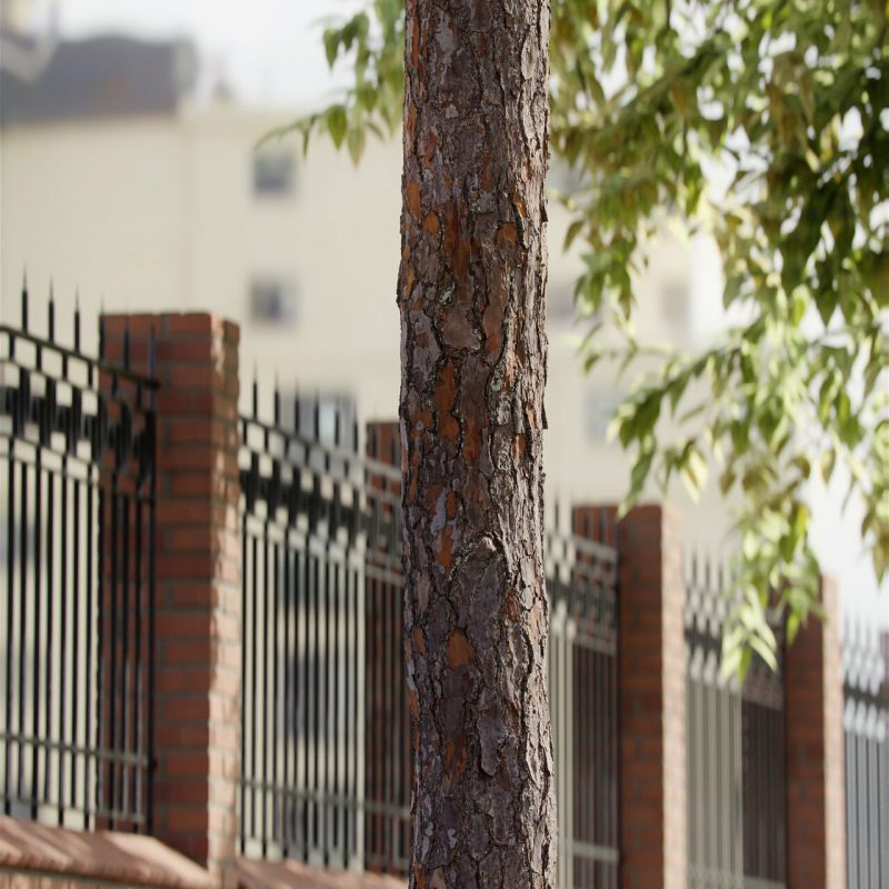 The image shows a pine tree bark render made using Friendly Shade textures