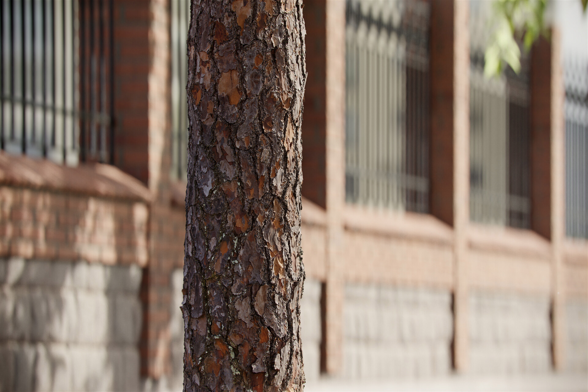 The image shows a pine tree trunk render made using Friendly Shade textures